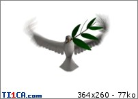 http://mk3.ti1ca.com/kt57r2ty.jpg